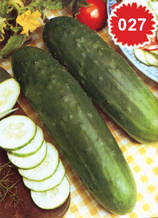 Краставица Маркетер - салатна