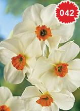 Нарцис Geranium