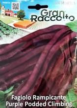 Градински фасул лилав увивен
