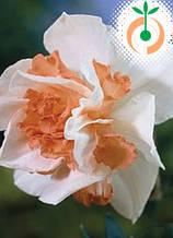 Нарцис Replete S