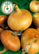 Лук - Allium cepa