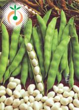 Фасул Полски - Phaseolus vulgaris