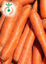 Моркови - Daucus Carota