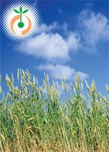 Зърнено-житни и фуражни култури