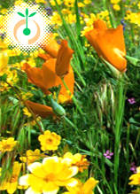Луковици за пролетно засаждане