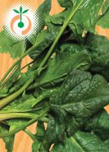 Спанак - Spinacia oleracea