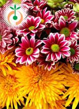 Цветни семена