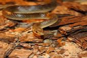 Срещу змии и влечуги