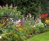 Полезни съвети за цветната градина
