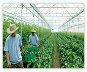 Полезни съвети в земеделието